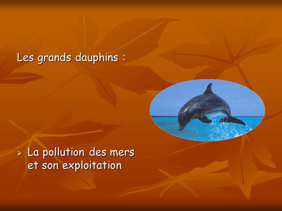 Les grands dauphins : La pollution des mers et son exploitation La pollution des mers et son exploitation