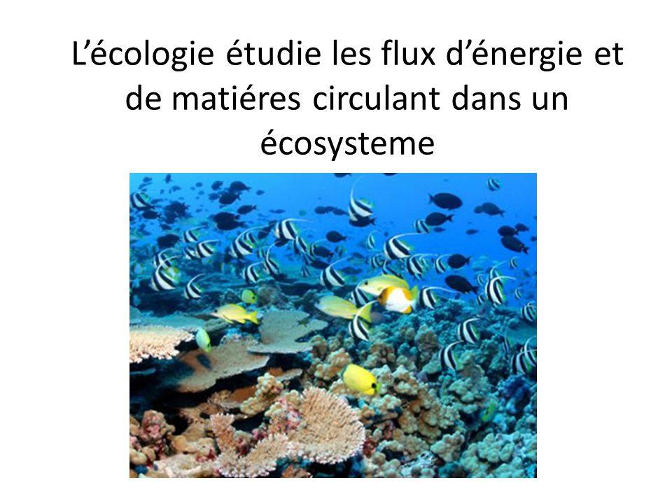 Lécologie étudie les flux dénergie et de matiéres circulant dans un écosysteme