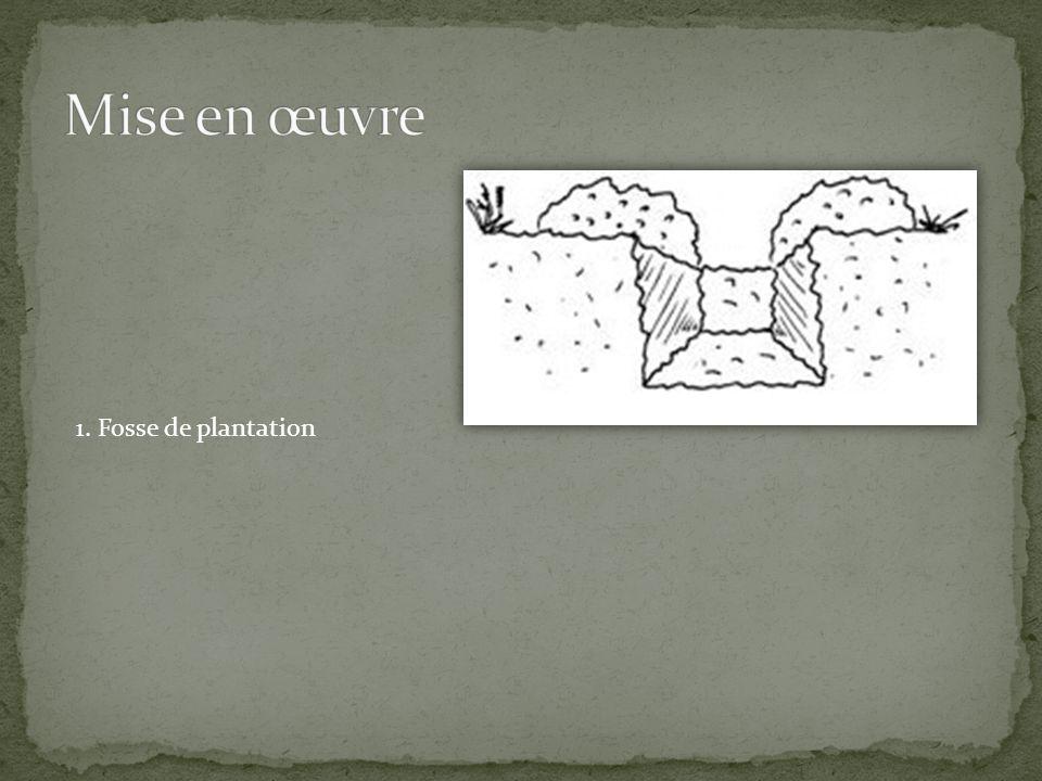 1. Fosse de plantation