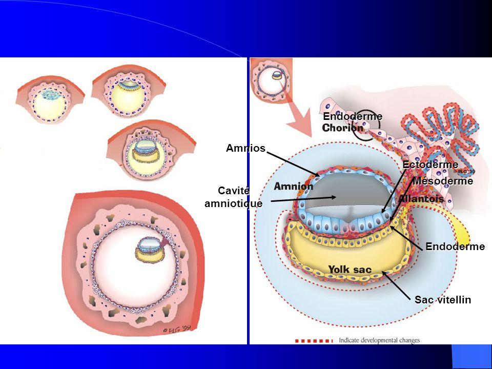 Ectoderme Mésoderme Endoderme Endoderme Sac vitellin Amnios Cavité amniotique