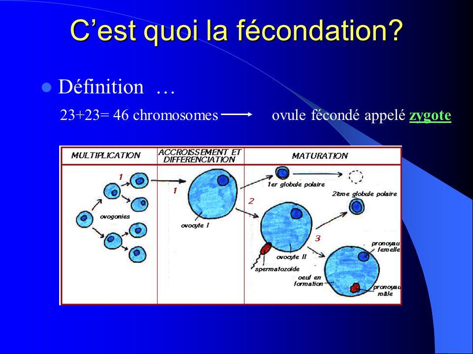 Cest quoi la fécondation? Définition … 23+23= 46 chromosomes ovule fécondé appelé zygote