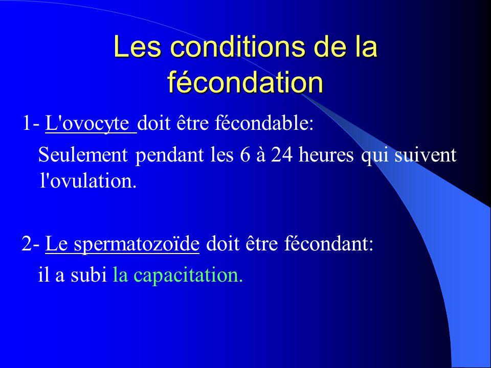 Les conditions de la fécondation 1- L'ovocyte doit être fécondable: Seulement pendant les 6 à 24 heures qui suivent l'ovulation. 2- Le spermatozoïde d