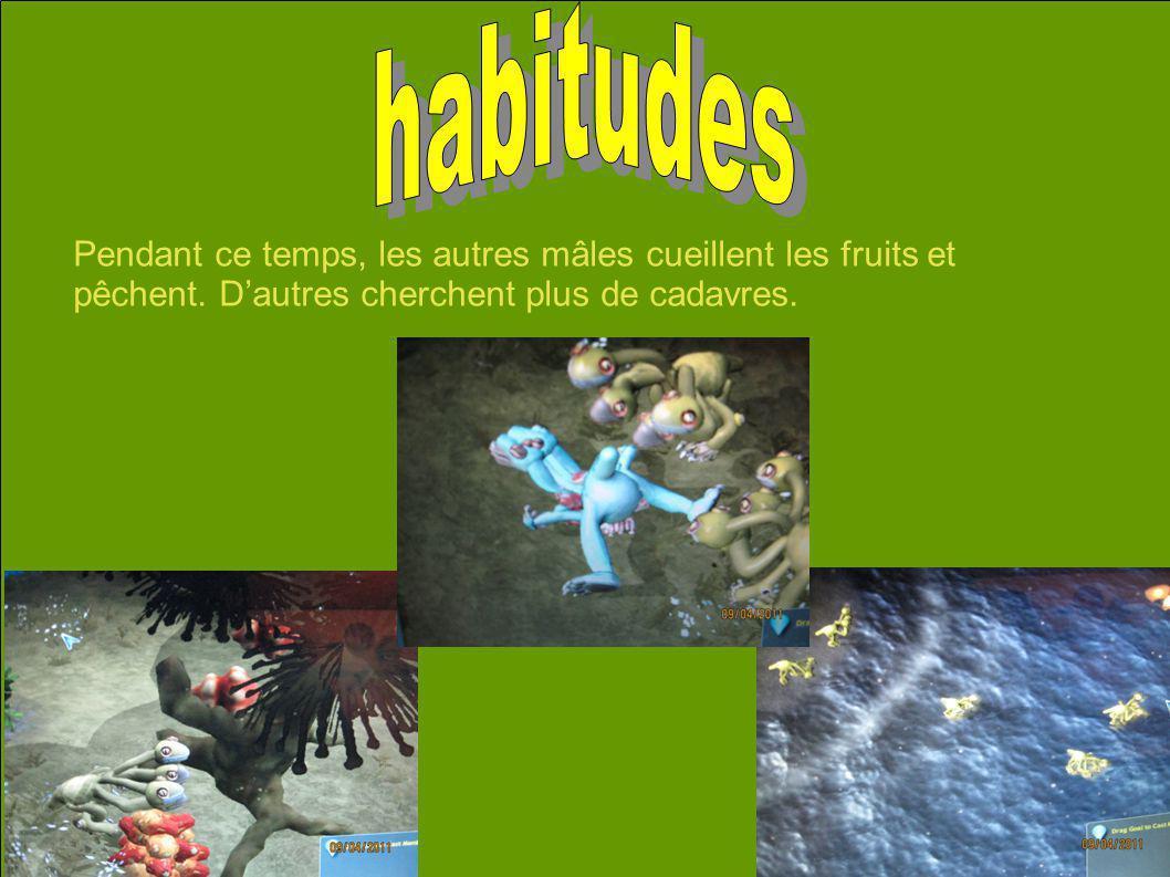 Pendant ce temps, les autres mâles cueillent les fruits et pêchent. Dautres cherchent plus de cadavres.