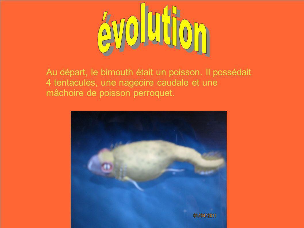 Au départ, le bimouth était un poisson. Il possédait 4 tentacules, une nageoire caudale et une mâchoire de poisson perroquet.