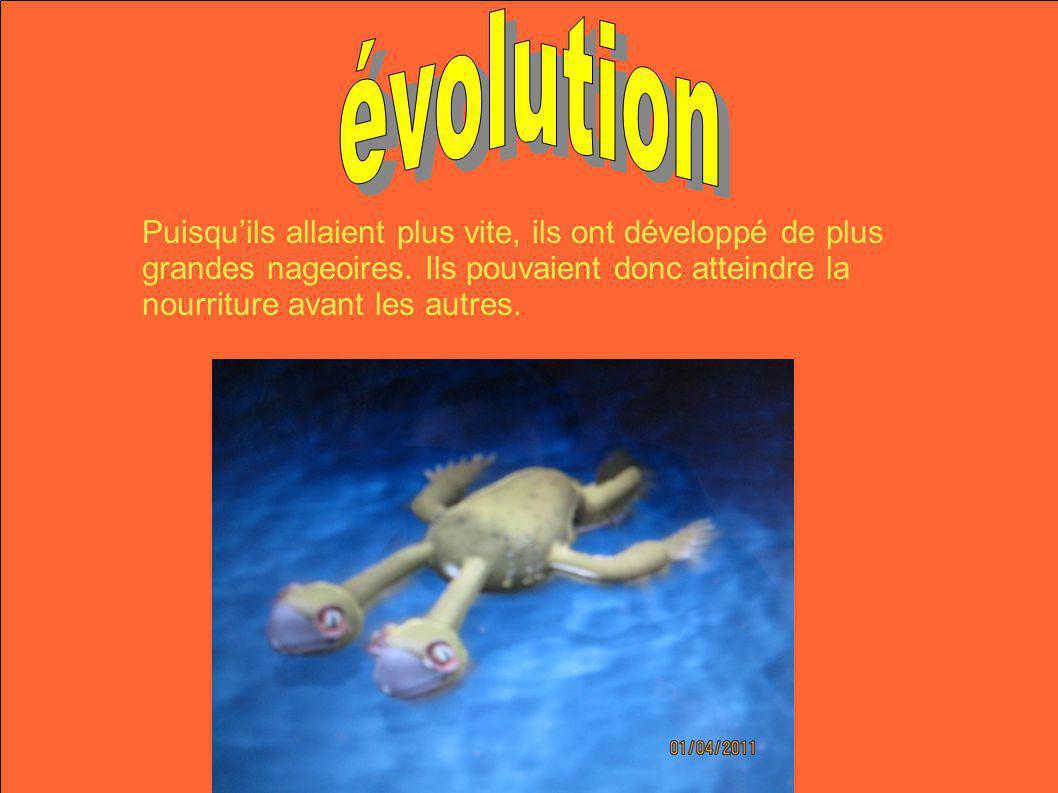 Puisquils allaient plus vite, ils ont développé de plus grandes nageoires. Ils pouvaient donc atteindre la nourriture avant les autres.