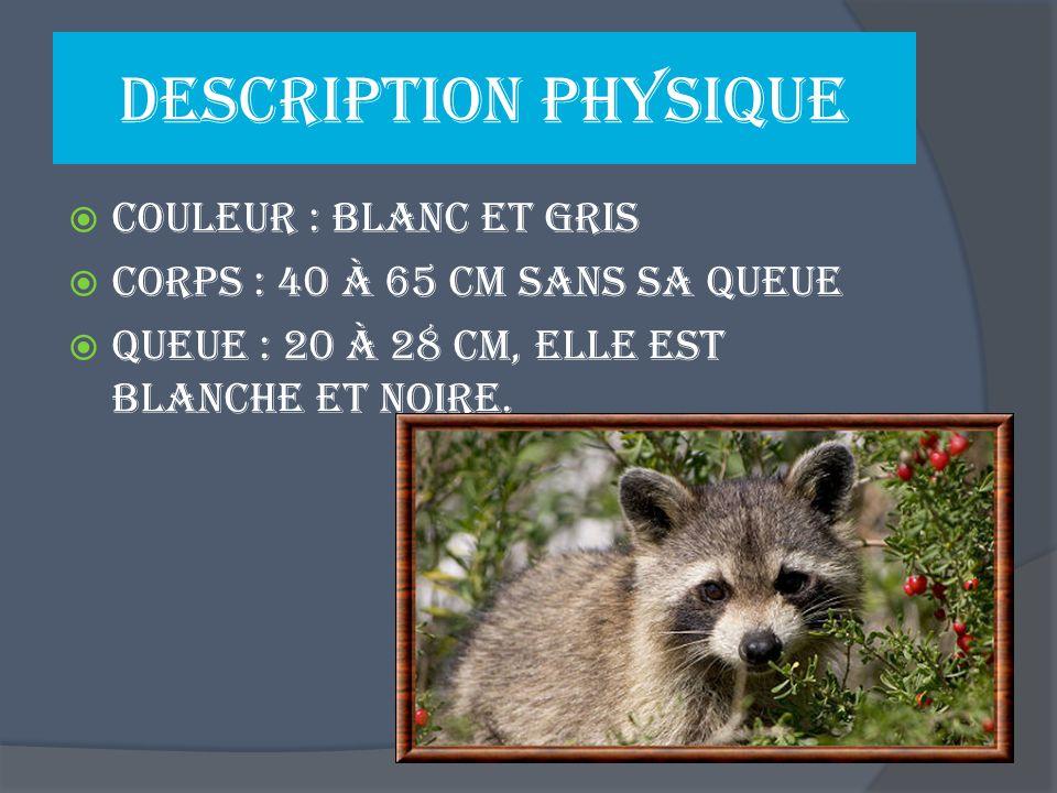 Description physique Couleur : blanc et gris Corps : 40 à 65 cm sans sa queue Queue : 20 à 28 cm, elle est blanche et noire.