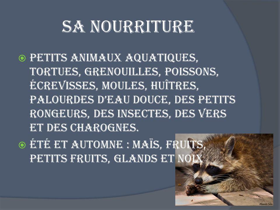 Sa nourriture Petits animaux aquatiques, tortues, grenouilles, poissons, écrevisses, moules, huîtres, palourdes deau douce, des petits rongeurs, des i