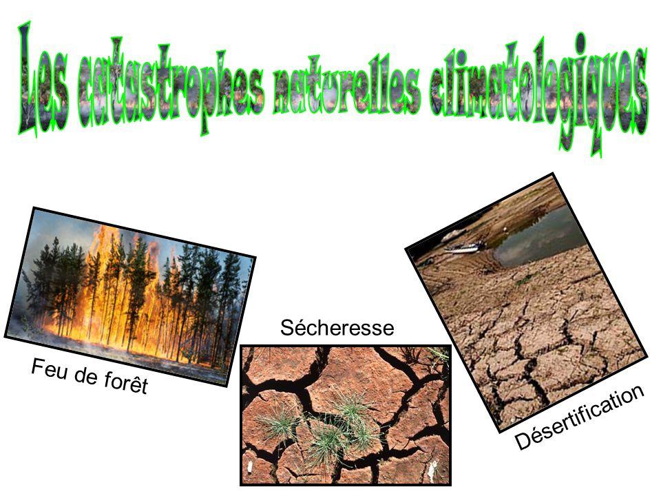 Feu de forêt Sécheresse Désertification