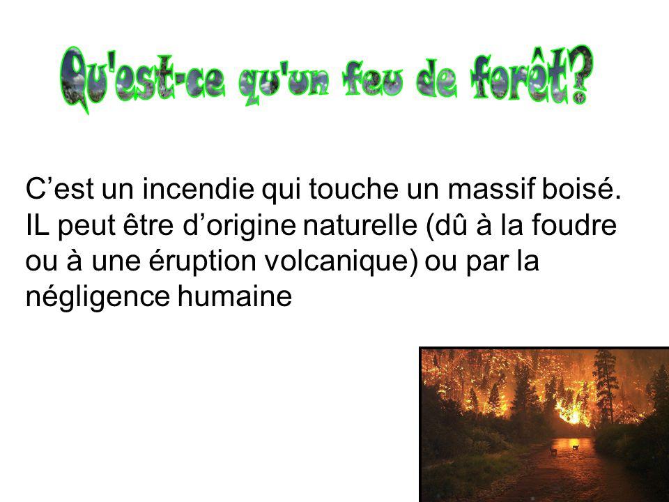 Cest un incendie qui touche un massif boisé. IL peut être dorigine naturelle (dû à la foudre ou à une éruption volcanique) ou par la négligence humain