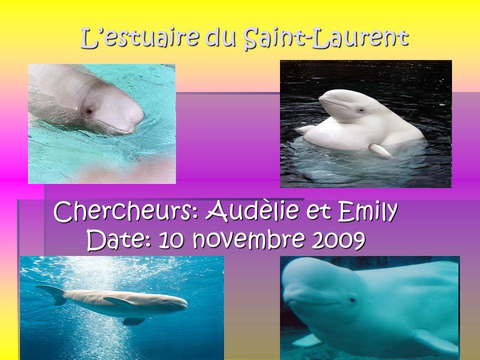 Lestuaire du Saint-Laurent Chercheurs: Audèlie et Emily Date: 10 novembre 2009