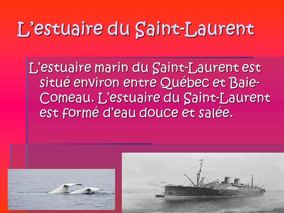 Lestuaire du Saint-Laurent Lestuaire marin du Saint-Laurent est situé environ entre Québec et Baie- Comeau. Lestuaire du Saint-Laurent est formé deau