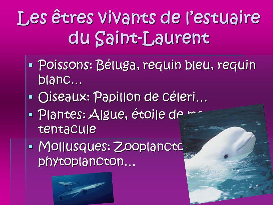 Les êtres vivants de lestuaire du Saint-Laurent Poissons: Béluga, requin bleu, requin blanc… Poissons: Béluga, requin bleu, requin blanc… Oiseaux: Pap