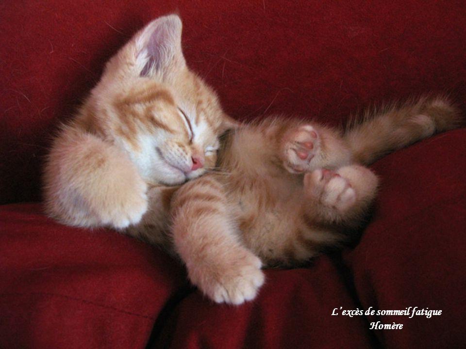 Lexcès de sommeil fatigue Homère