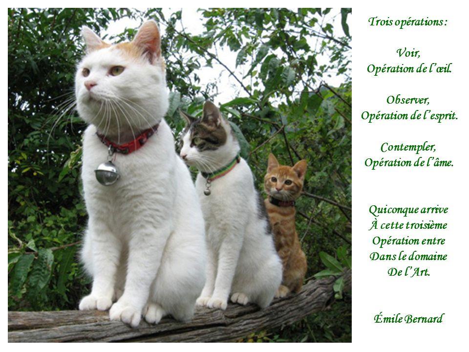 Trois opérations : Voir, Opération de lœil. Observer, Opération de lesprit. Contempler, Opération de lâme. Quiconque arrive À cette troisième Opératio