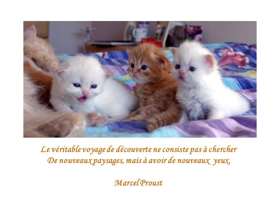 Le véritable voyage de découverte ne consiste pas à chercher De nouveaux paysages, mais à avoir de nouveaux yeux. Marcel Proust
