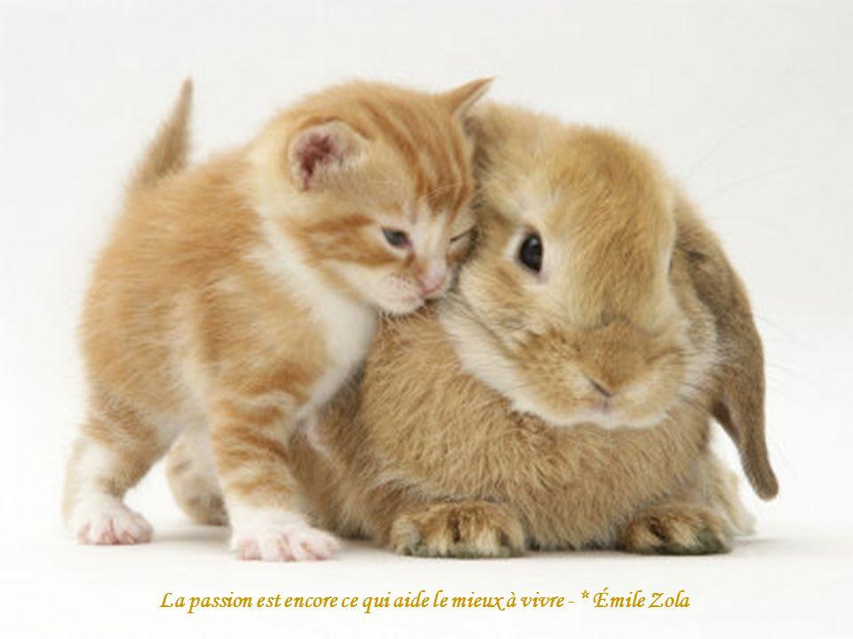 La passion est encore ce qui aide le mieux à vivre - * Émile Zola