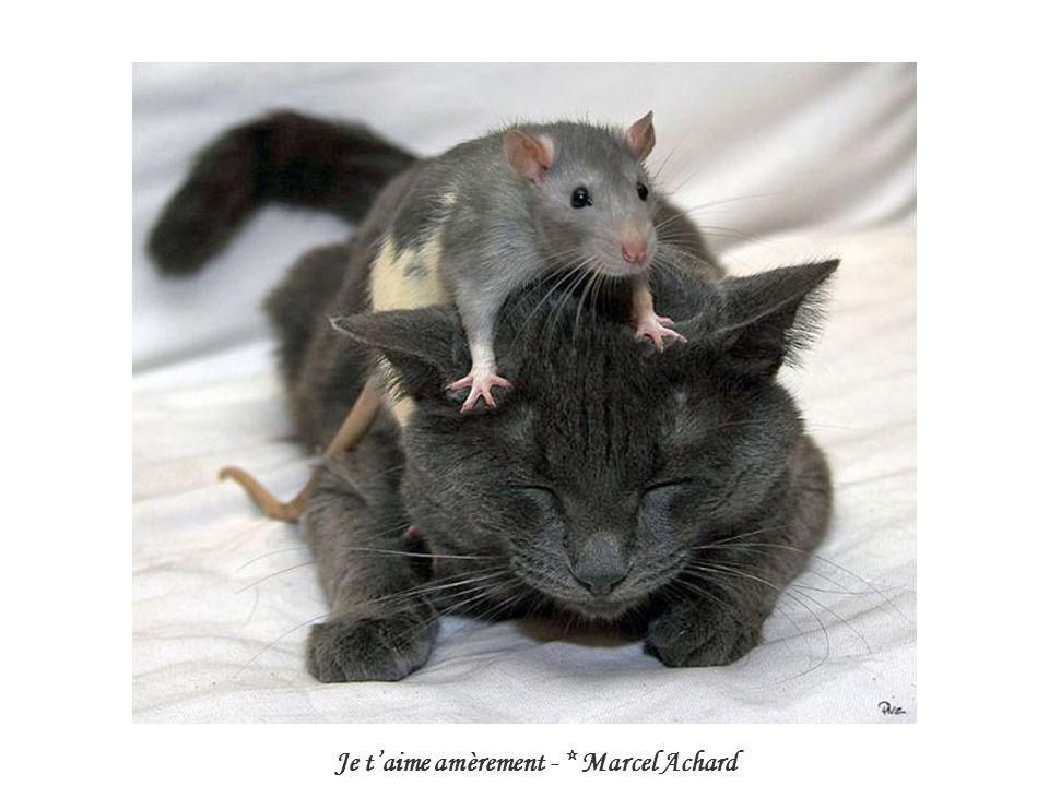 Je taime amèrement - * Marcel Achard