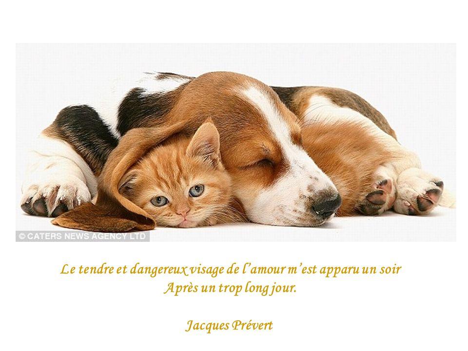 Le tendre et dangereux visage de lamour mest apparu un soir Après un trop long jour. Jacques Prévert