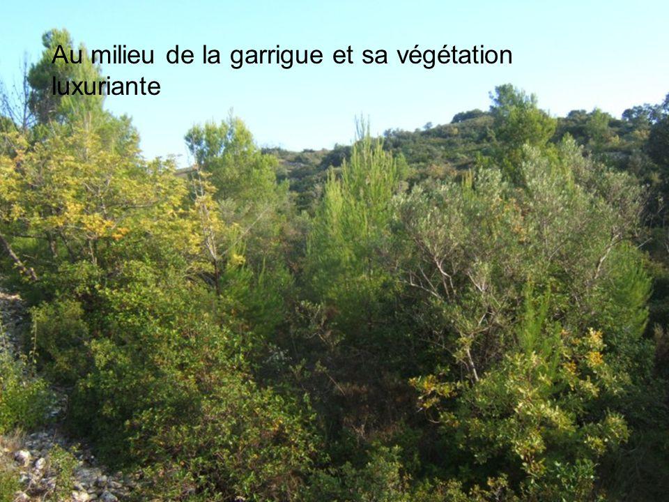 Au milieu de la garrigue et sa végétation luxuriante