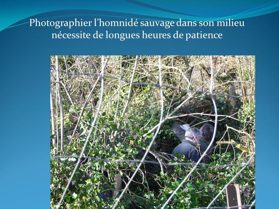 Photographier lhomnidé sauvage dans son milieu nécessite de longues heures de patience