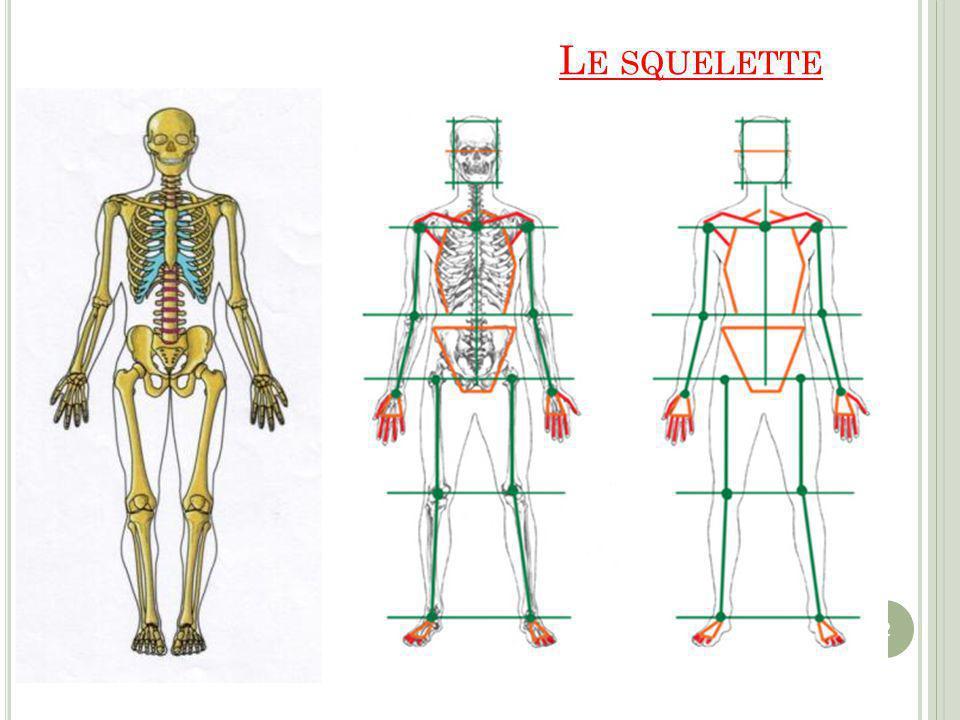 L E SQUELETTE 2