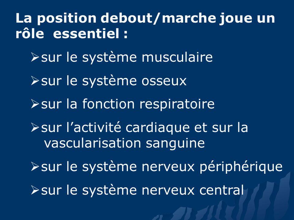 La position debout/marche joue un rôle essentiel : sur le système musculaire sur le système osseux sur la fonction respiratoire sur lactivité cardiaque et sur la vascularisation sanguine sur le système nerveux périphérique sur le système nerveux central