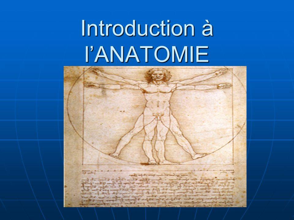Introduction à lANATOMIE