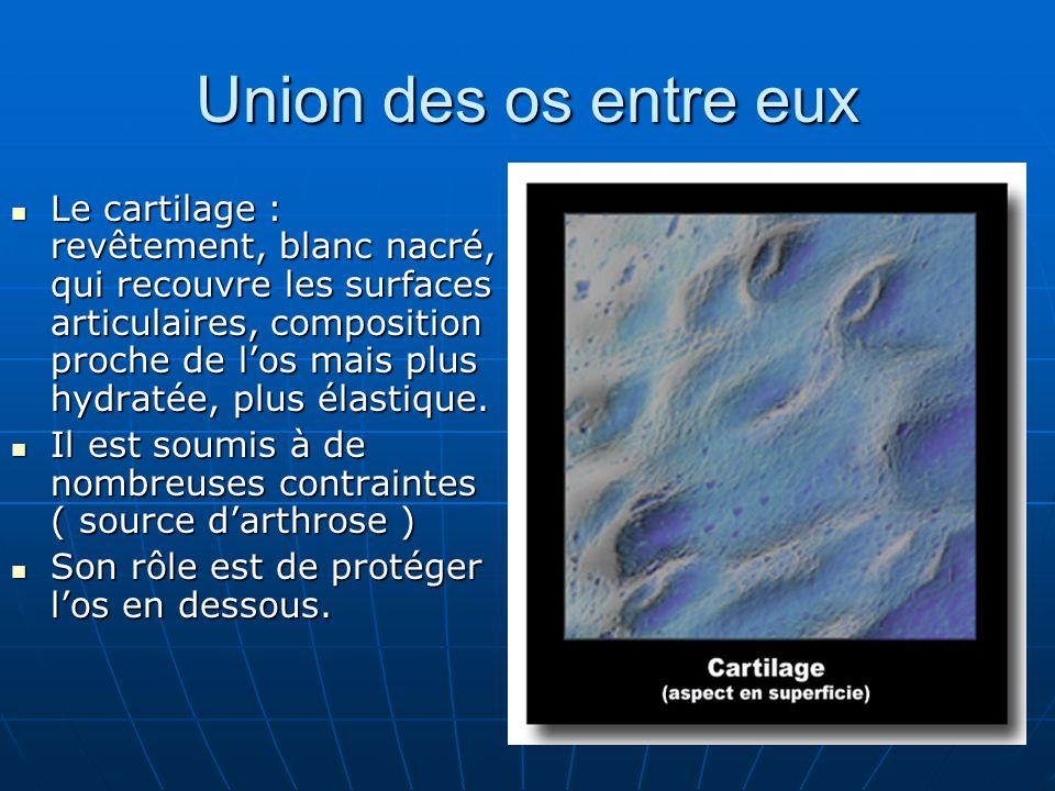 Union des os entre eux Le cartilage : revêtement, blanc nacré, qui recouvre les surfaces articulaires, composition proche de los mais plus hydratée, p
