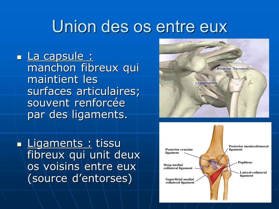 Union des os entre eux La capsule : manchon fibreux qui maintient les surfaces articulaires; souvent renforcée par des ligaments. La capsule : manchon