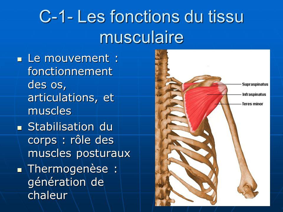 C-1- Les fonctions du tissu musculaire Le mouvement : fonctionnement des os, articulations, et muscles Le mouvement : fonctionnement des os, articulat