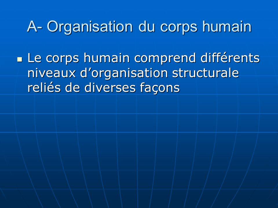 A- Organisation du corps humain Le corps humain comprend différents niveaux dorganisation structurale reliés de diverses façons Le corps humain compre