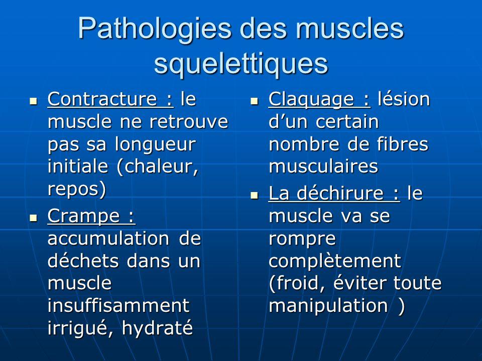Pathologies des muscles squelettiques Contracture : le muscle ne retrouve pas sa longueur initiale (chaleur, repos) Contracture : le muscle ne retrouv