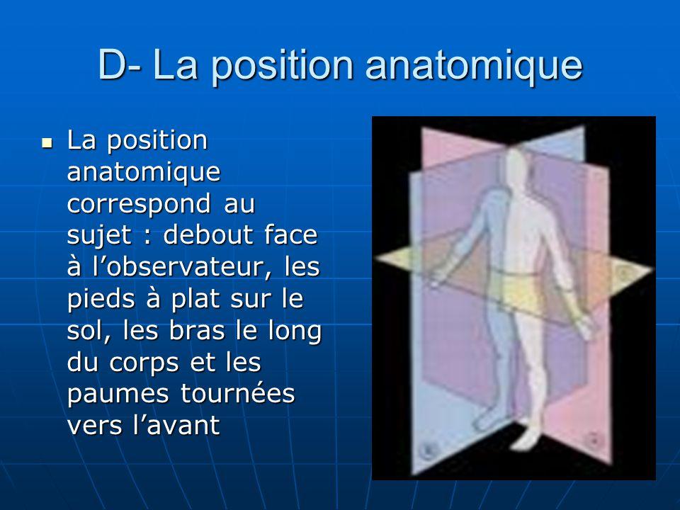 D- La position anatomique La position anatomique correspond au sujet : debout face à lobservateur, les pieds à plat sur le sol, les bras le long du co