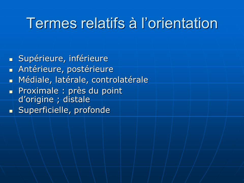 Termes relatifs à lorientation Supérieure, inférieure Supérieure, inférieure Antérieure, postérieure Antérieure, postérieure Médiale, latérale, contro