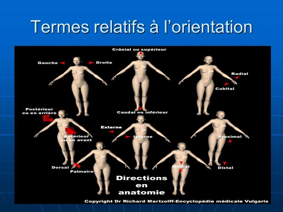 Termes relatifs à lorientation