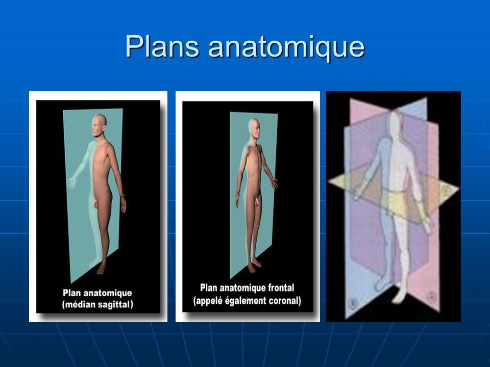 Plans anatomique