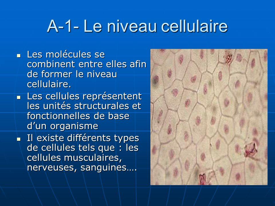 A-1- Le niveau cellulaire Les molécules se combinent entre elles afin de former le niveau cellulaire. Les molécules se combinent entre elles afin de f