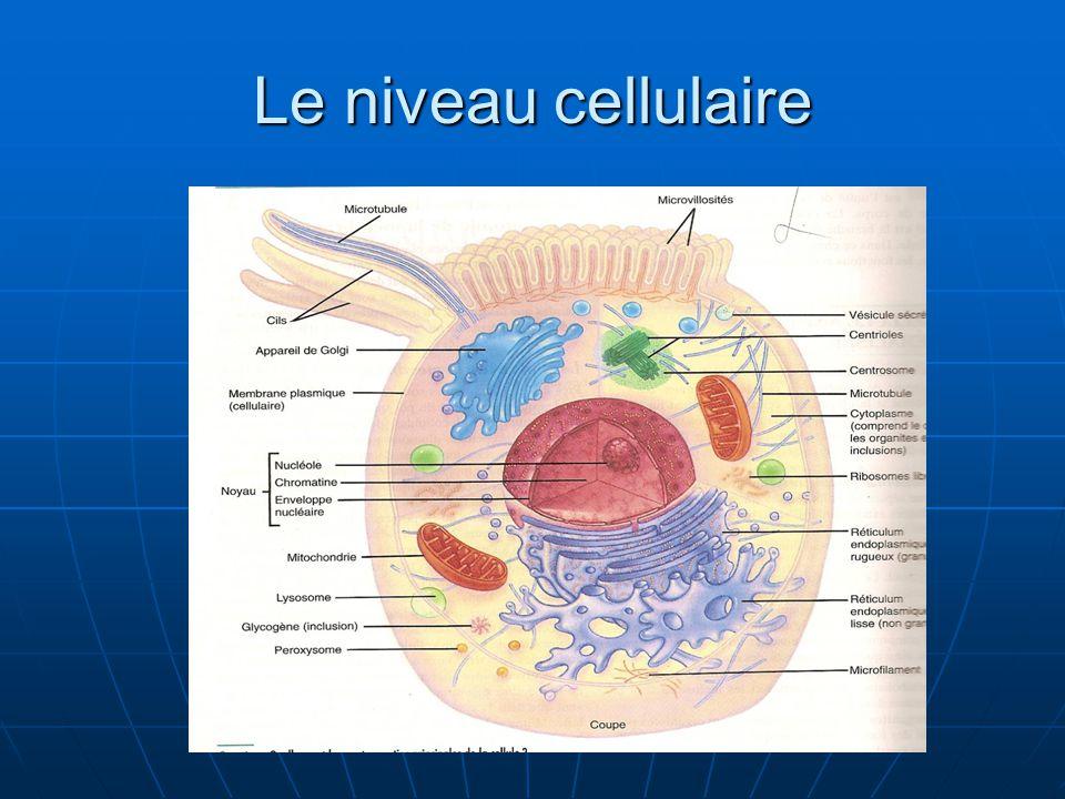 Le niveau cellulaire