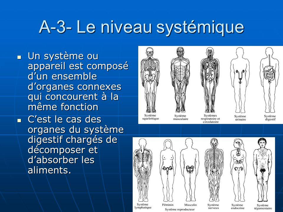 A-3- Le niveau systémique Un système ou appareil est composé dun ensemble dorganes connexes qui concourent à la même fonction Un système ou appareil e