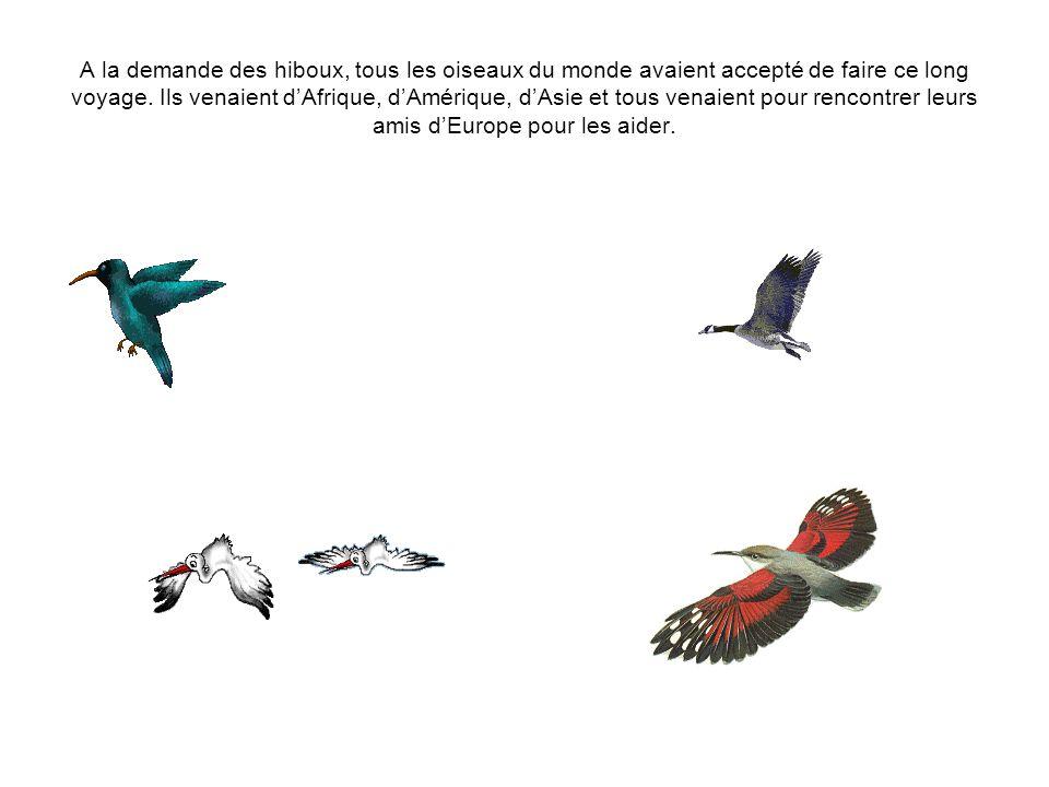A la demande des hiboux, tous les oiseaux du monde avaient accepté de faire ce long voyage. Ils venaient dAfrique, dAmérique, dAsie et tous venaient p