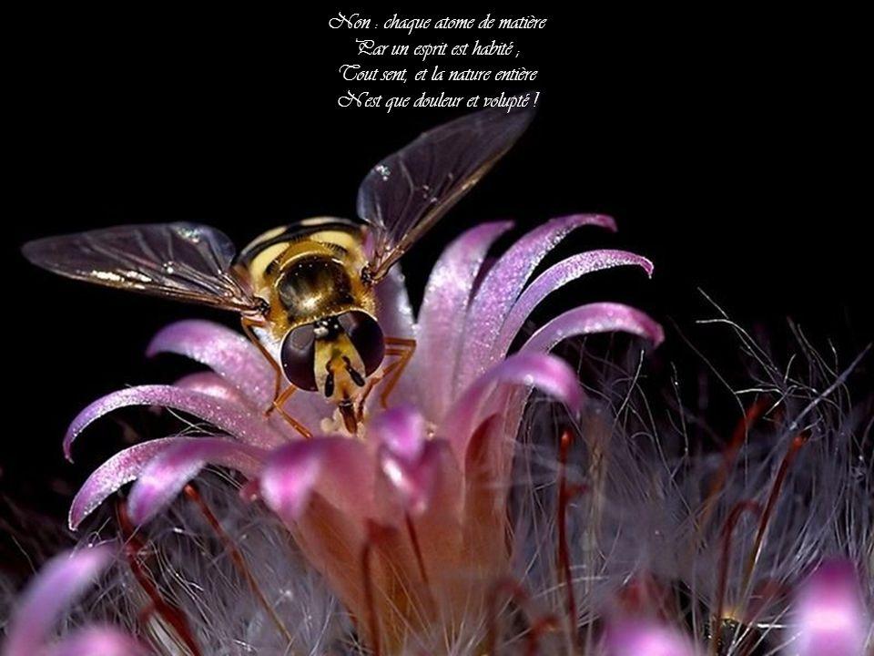 Non : chaque atome de matière Par un esprit est habité ; Tout sent, et la nature entière N est que douleur et volupté !