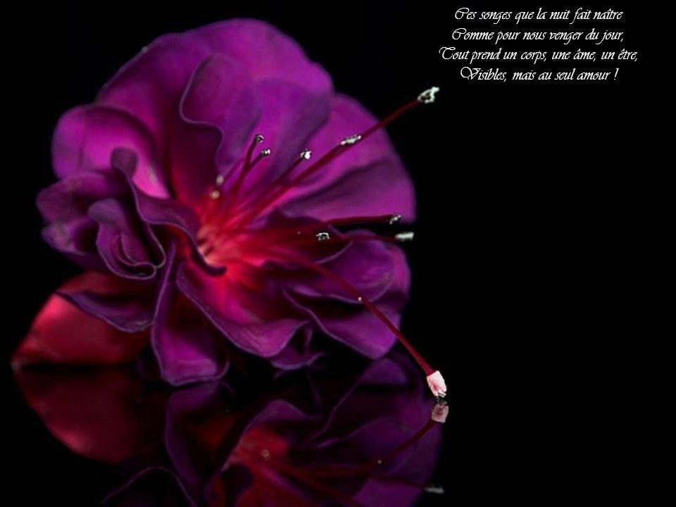Chaque parole réprimée Qui meurt sur mes lèvres de feu, N'osant même à la fleur aimée D'un nom chéri livrer l'aveu ;