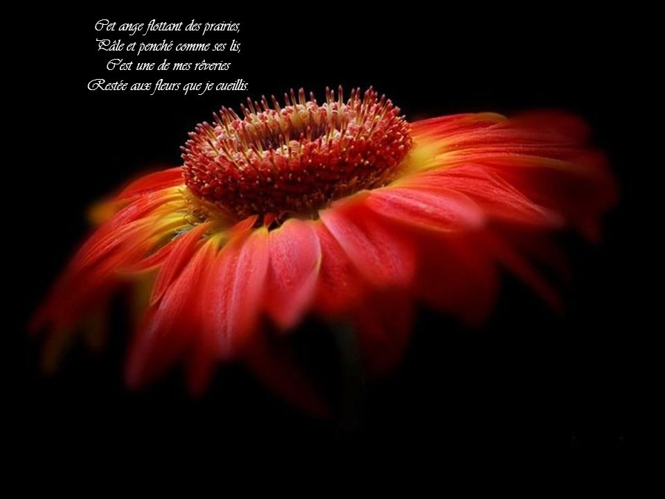 Cet ange flottant des prairies, Pâle et penché comme ses lis, C est une de mes rêveries Restée aux fleurs que je cueillis.