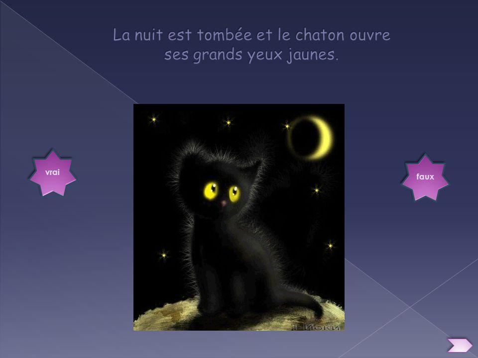 vrai faux Le chat sendort contre son doudou.