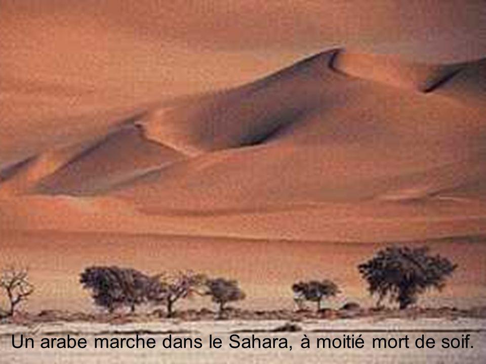 Un arabe marche dans le Sahara, à moitié mort de soif.