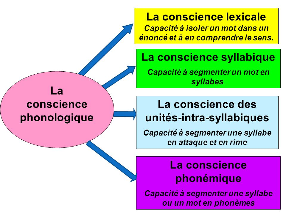 La conscience phonologique La conscience lexicale Capacité à isoler un mot dans un énoncé et à en comprendre le sens. La conscience syllabique Capacit
