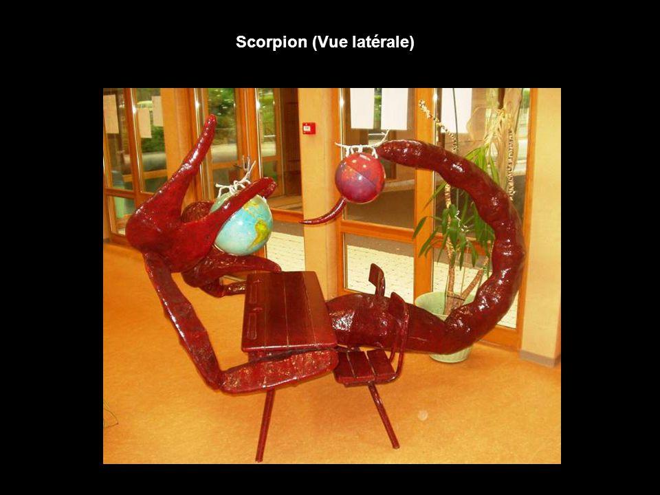 Scorpion (Vue latérale)