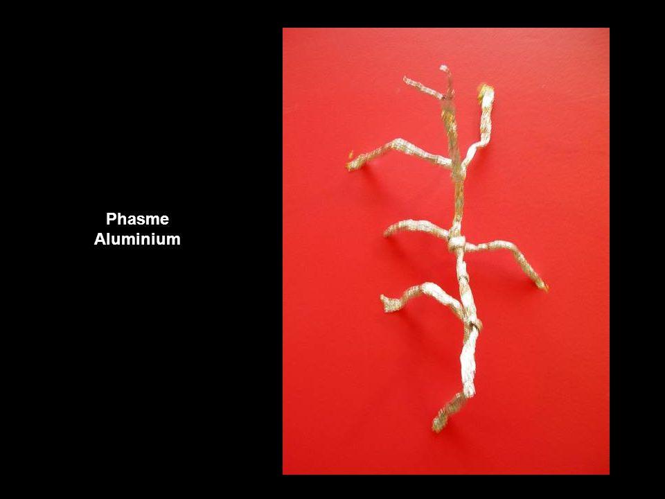 Phasme Aluminium