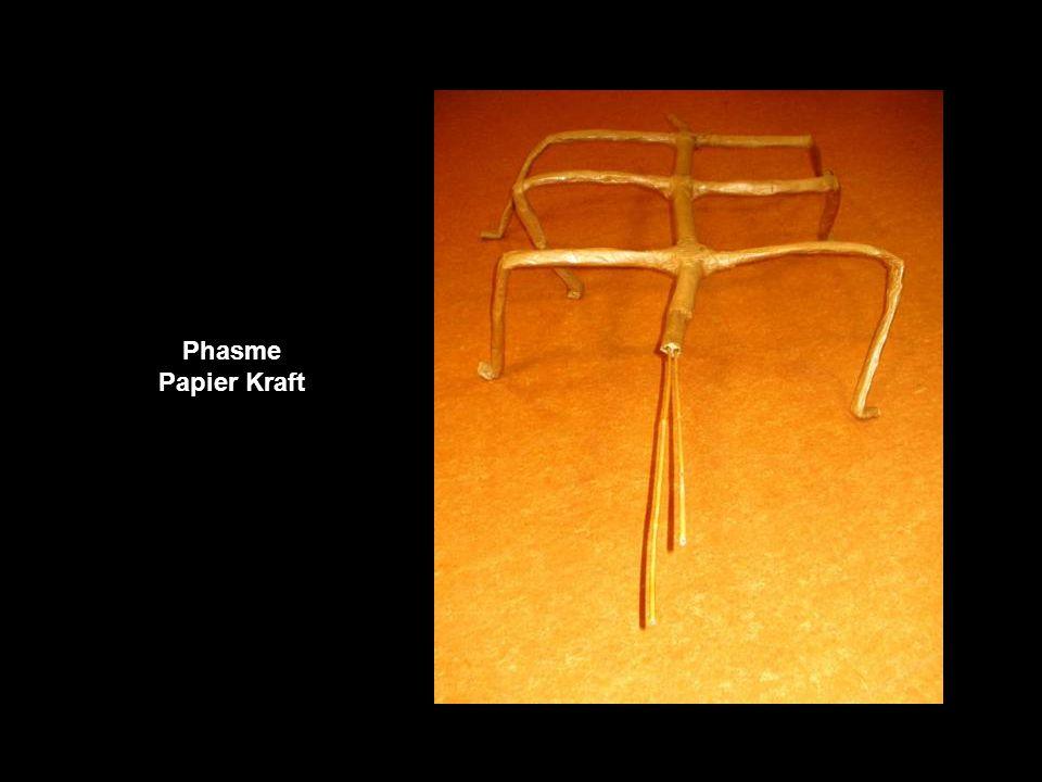 Phasme Papier Kraft