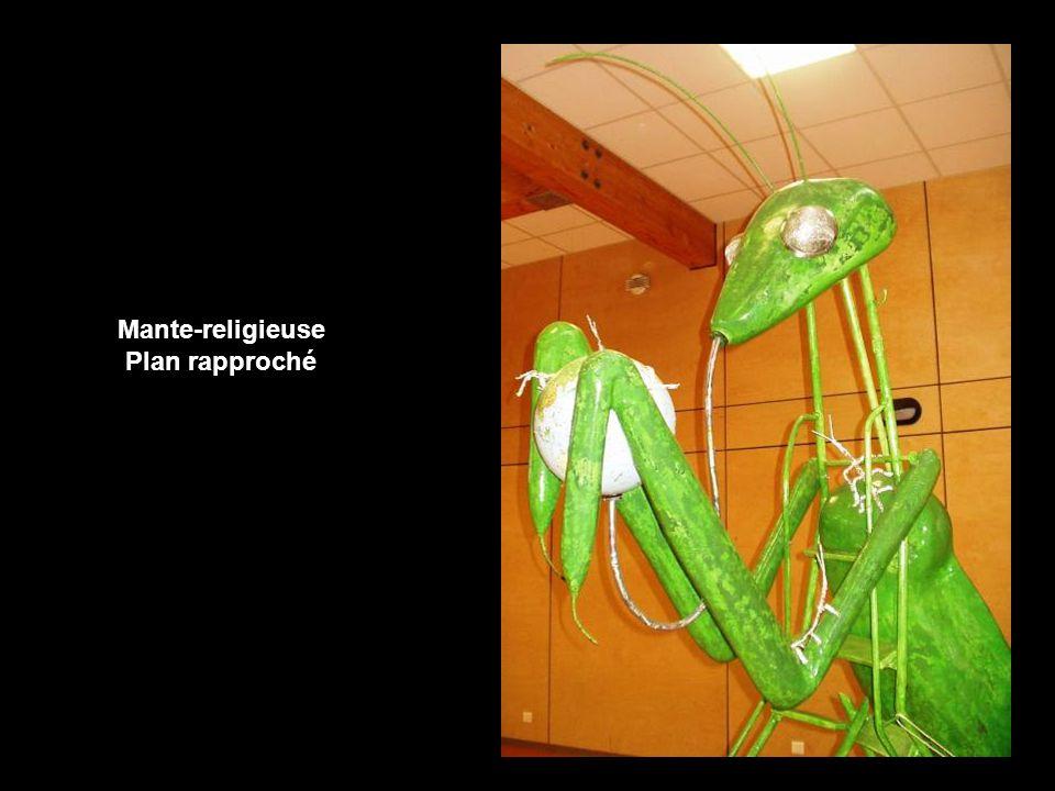 Scorpion (vue de face)